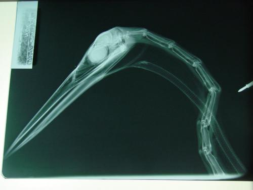 x-ray 04