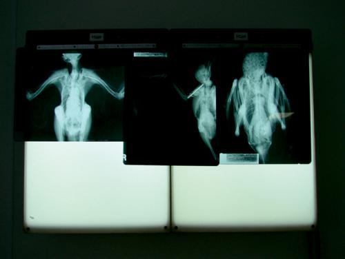 x-ray 05